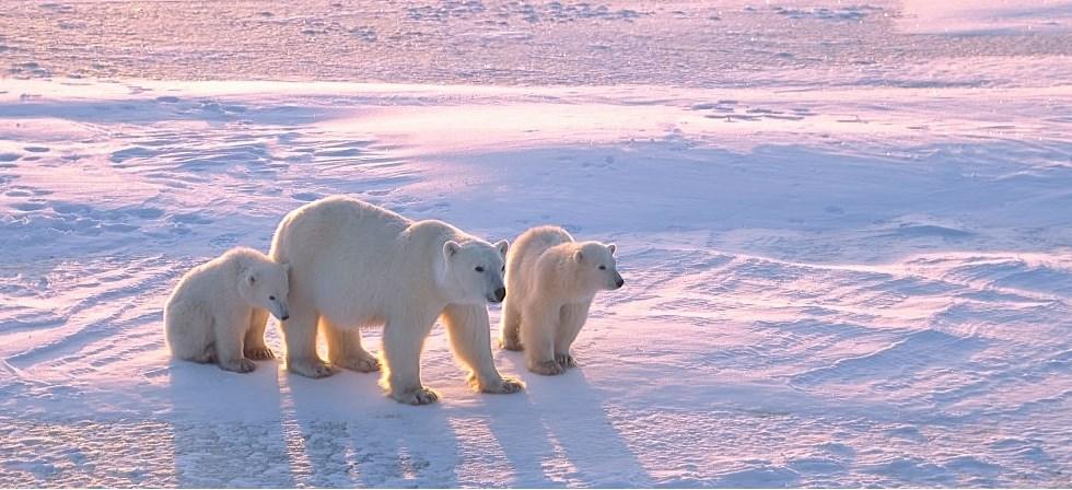 NOUVEAUTÉ! Splendeurs de l'Arctique