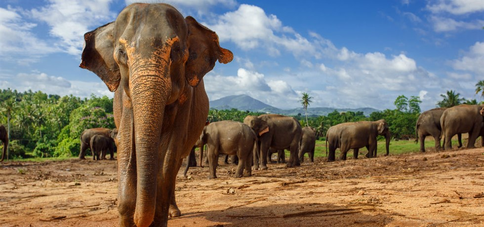 Offre à Durée Limitée** Jusqu'à -260 € ! Sri Lanka Passionnément