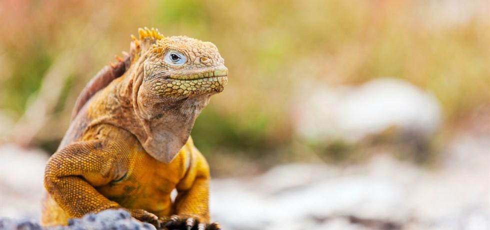 Jusqu'à -570€ / personne Vols Inclus** ! Grand Circuit Équateur & Galapagos