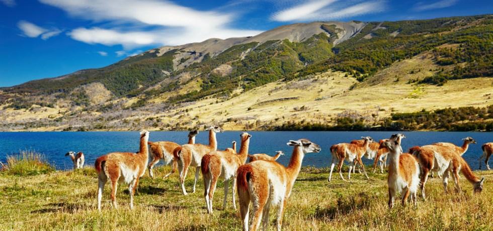 Exclusif Rive Gauche -500 €/pers** ! Patagonie & Terres Australes - 21 jours