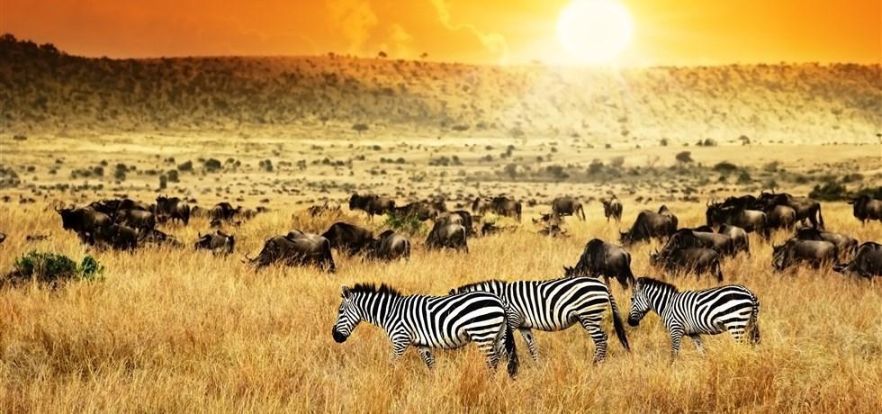 EXCLUSIVITÉ DÉCEMBRE 2017! Splendeurs du Kenya