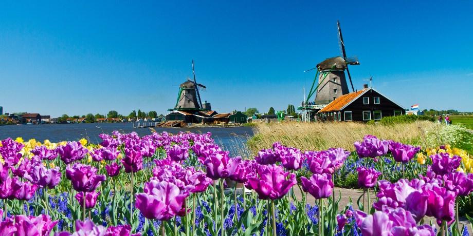 Croisière des Tulipes