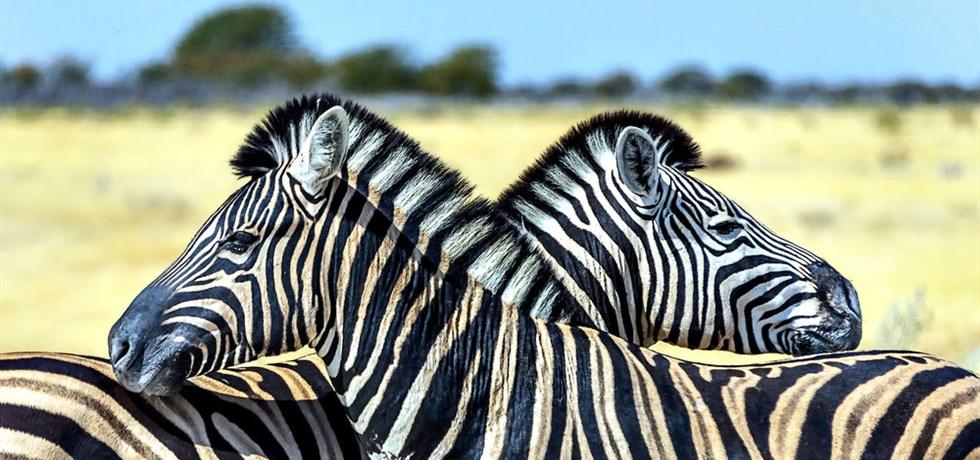 Réservez Tôt** -100 €/pers ! Afrique du Sud, Merveille Australe